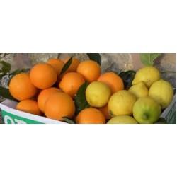 Gemischt 4 kg Orange 4 kg Mandarine 2 kg Zitrone